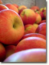 apples_in_crate_thumbnail