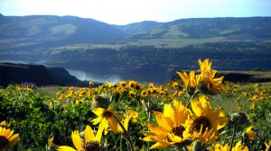 Enjoy sun and wildflowers in the Columbia River Gorge
